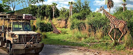 Reader ratings and reviews for Disney's Animal Kingdom