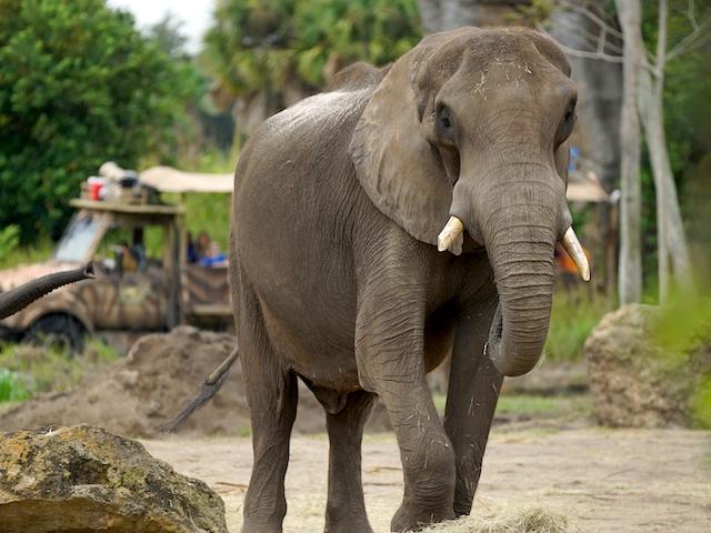 Mac the elephant