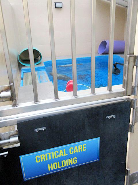 Critical care pool