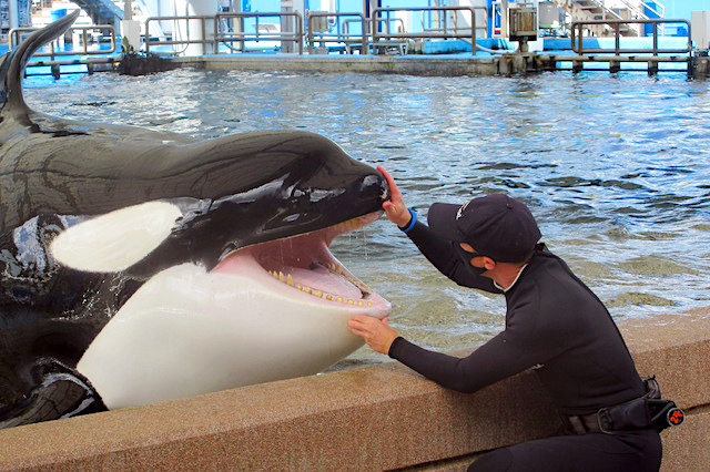 Orca check-up