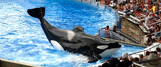 What's Wrong with SeaWorld?