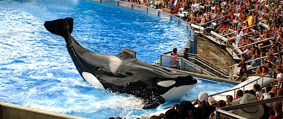 SeaWorld announces passing of its largest, most famous orca