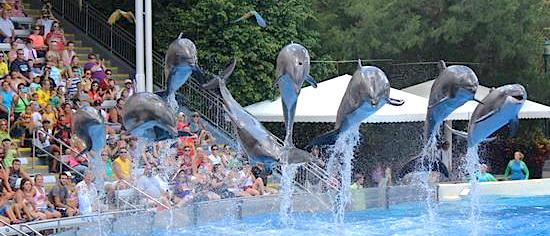 Dolphin show changes are coming to SeaWorld Orlando