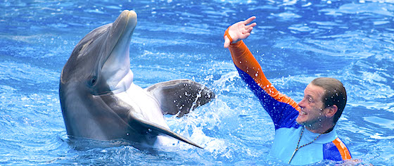 Dolphin Days opens at SeaWorld Orlando, replacing Blue Horizons