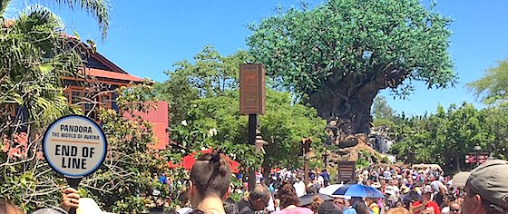 Pandora, Guardians welcome huge crowds on their opening days