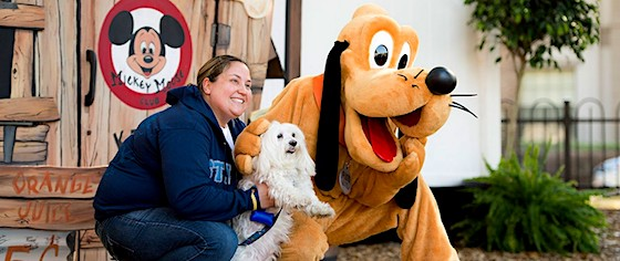 Walt Disney World to start allowing dogs in hotel guest rooms