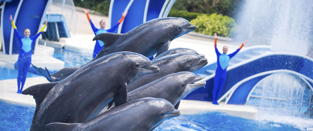 SeaWorld Promotes CEO, Announces Earnings