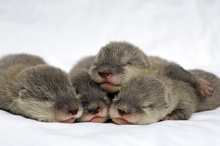 Baby otters at SeaWorld