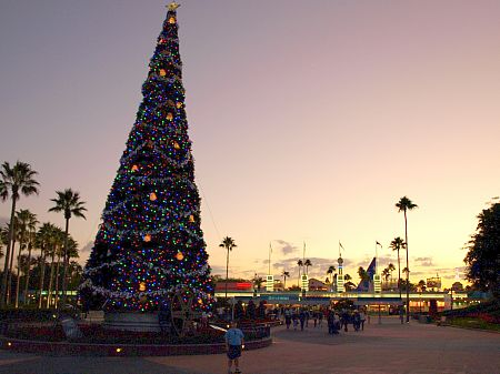 Christmas tree at sunset
