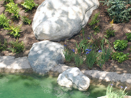 Violets on the Rivers of America