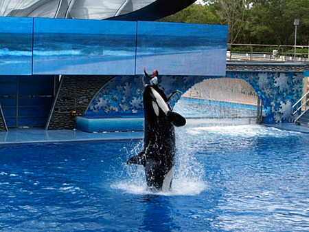 SeaWorld trainer and orca
