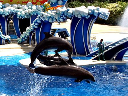 Dolphins at SeaWorld Orlando