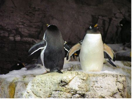 Photo of Penguin Encounter