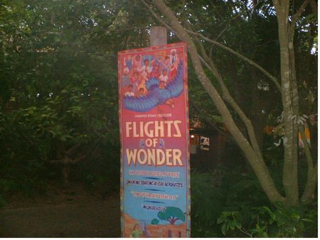 Flights of Wonder photo, from ThemeParkInsider.com