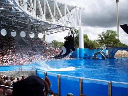 Shamu in Believe at SeaWorld Orlando