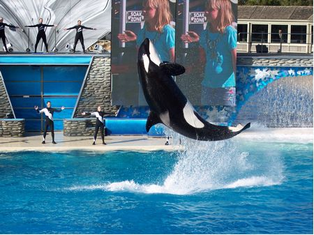 Believe show at SeaWorld San Diego