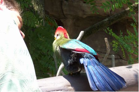 Tropical Bird Aviary photo, from ThemeParkInsider.com