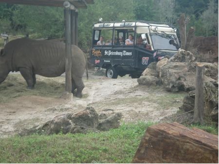 Photo of Rhino Rally