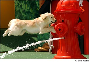 Pets Rule! photo, from ThemeParkInsider.com