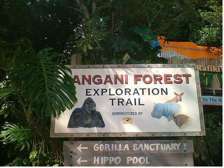 Pangani Forest Exploration Trail photo, from ThemeParkInsider.com