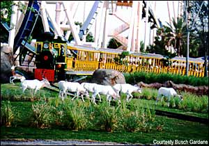 Serengeti Express Railway photo, from ThemeParkInsider.com