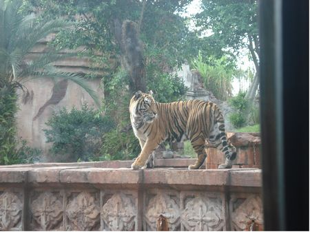 Maharajah Jungle Trek photo, from ThemeParkInsider.com
