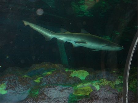 Shark Encounter photo, from ThemeParkInsider.com