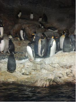 Penguin Encounter photo, from ThemeParkInsider.com