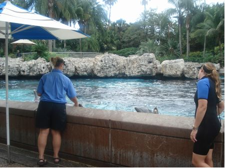 Dolphin Cove photo, from ThemeParkInsider.com