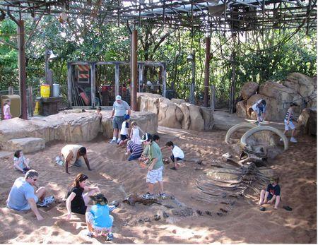 The Boneyard At Disney S Animal Kingdom