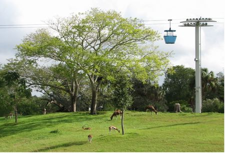 Skyride photo, from ThemeParkInsider.com