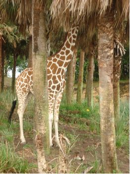 Kilimanjaro Safaris photo, from ThemeParkInsider.com
