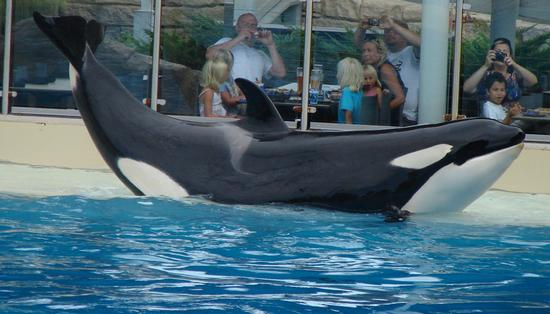 Photo of Dine With Shamu
