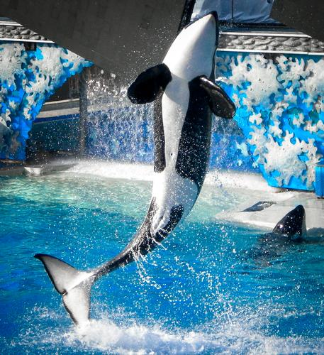Photo of SeaWorld San Diego