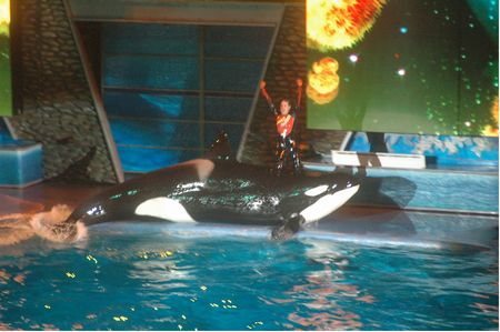 Shamu Rocks photo, from ThemeParkInsider.com