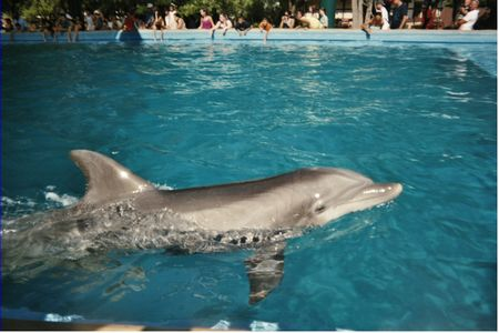 Photo of Dolphin Cove