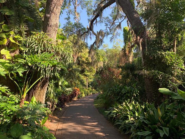 Lush pathway