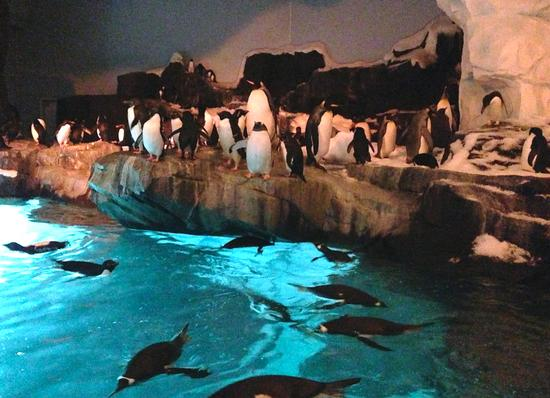 SeaWorld's Antarctica penguins