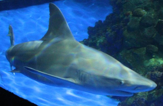 Photo of Sharks/The Coral Reef