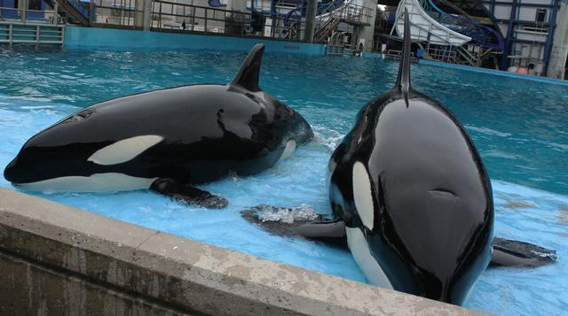 Photo of SeaWorld San Antonio