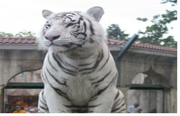 Temple of the Tiger photo, from ThemeParkInsider.com