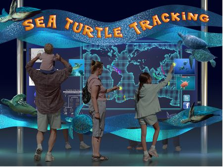 Sea Turtle Tracking