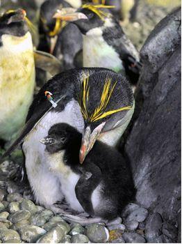 Photo of Penguin Encounter