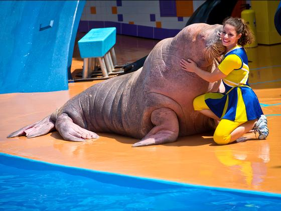 SeaWorld Orlando photo, from ThemeParkInsider.com