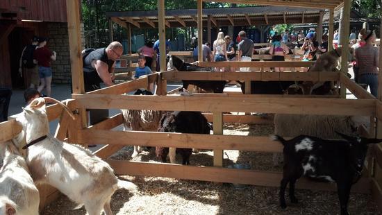 photo of farm animals