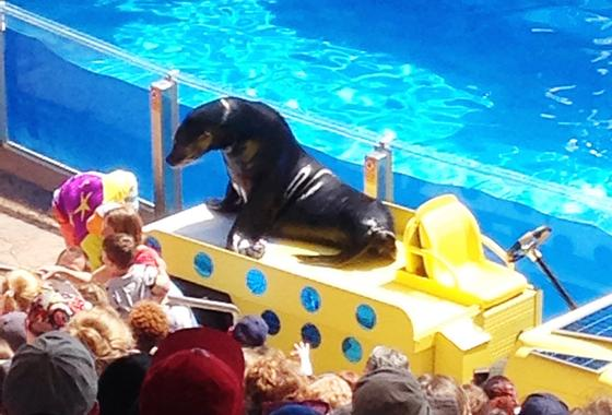 Photo of Clyde and Seamore's Sea Lion High