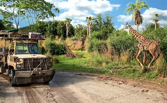 Photo of Kilimanjaro Safaris