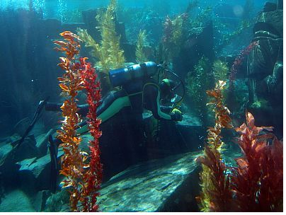 Finding Nemo Submarine Voyage photo, from ThemeParkInsider.com