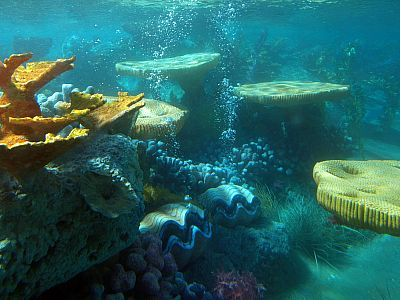 Finding Nemo: Submarine Voyage photo, from ThemeParkInsider.com