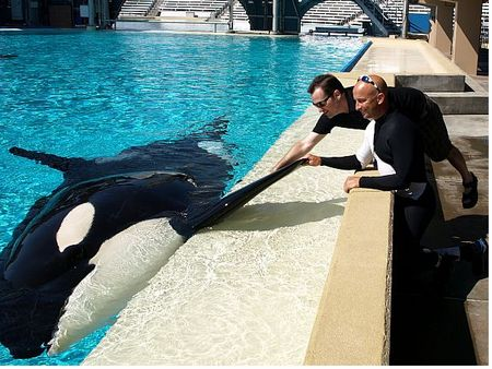 Robert Niles, Ken Peters and Corky the Orca at SeaWorld San Diego